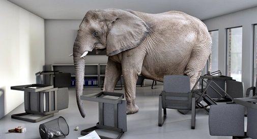 c'è un elefante nella stanza