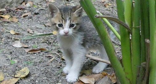 A Castelfranco si cerca la nonnina che abbandona i gatti