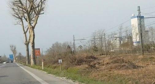Chilometri di siepe tagliati tra Spresiano e Ponte della Priula: Enpa filma tutto e denuncia