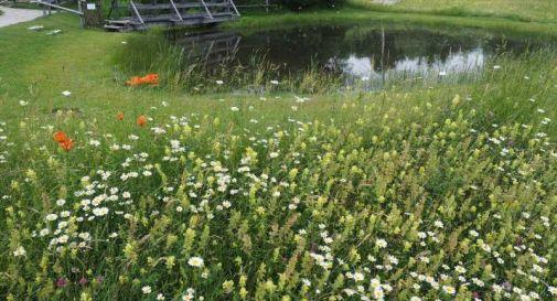 Apre anche il Giardino Botanico del Cansiglio