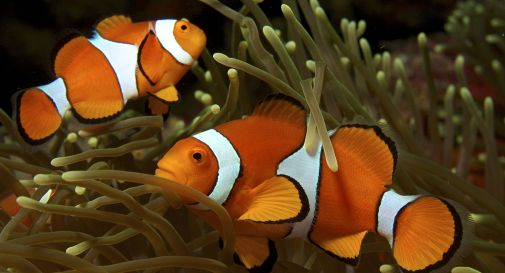 Troppa luce artificiale, Nemo a rischio