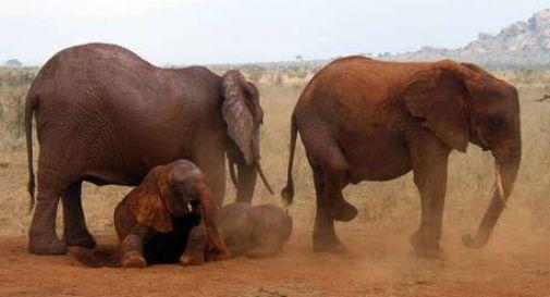 Kenya: in fiamme la riserva naturale dello Tsavo