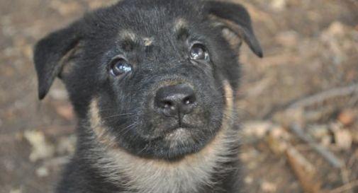 Cuccioli nel bagagliaio senza cibo né acqua