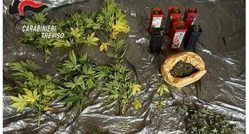 Blitz dei Carabinieri, gli trovano le piante di cannabis nascoste nel bosco vicino a casa