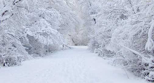 incidenti neve vittorio conegliano