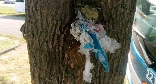 I rifiuti penzolano addirittura dagli alberi