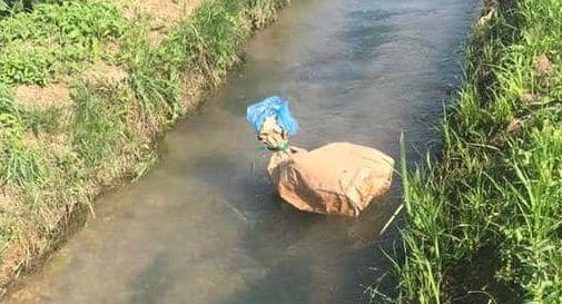 Gattini messi in un sacco e gettati in un canale
