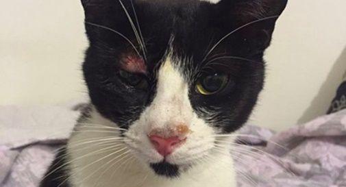 Gatti picchiati e maltrattati, uno rischia di perdere l'occhio