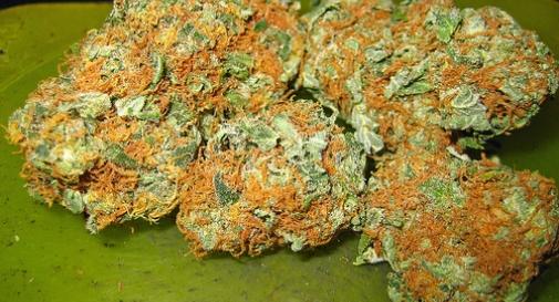 Quattro alpini indagati per spaccio di marijuana