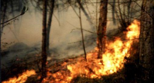 Incendio in bosco Altopiano Asiago, fiamme estese 20 ettari