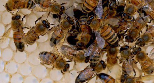 Multa fino a 50.000 euro per chi uccide un'ape o una vespa