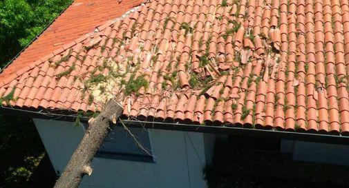 Albero sul tetto in via Casette a Gorgo al Monticano