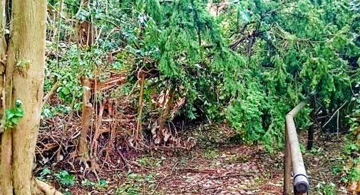 Vittorio Veneto, il maltempo colpisce anche il sentiero di Sant'Augusta: alberi caduti e rami spezzati