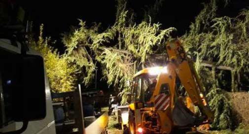 Conegliano, alberi messi ko dal vento: Collalbrigo la zona più colpita. - Oggi Treviso