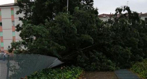 Raffiche di vento e pioggia, notte di paura a Treviso