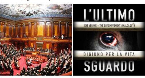 Il Senato e
