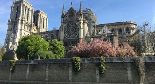 Boom di acquisti sul sito di Notre Dame