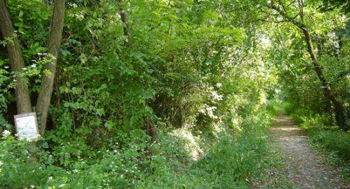 bosco di Olmè