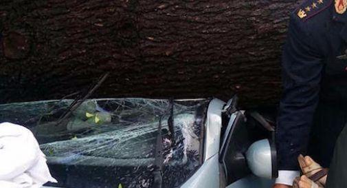 l'albero caduto la scorsa settimana sulla Renault con all'interno madre e figlie