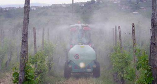 Pesticidi e vigneti, torna l'allarme a Colle Umberto