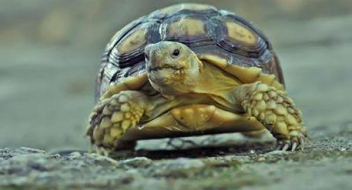Giocano a calcio ma al posto del pallone si lanciano una povera tartaruga