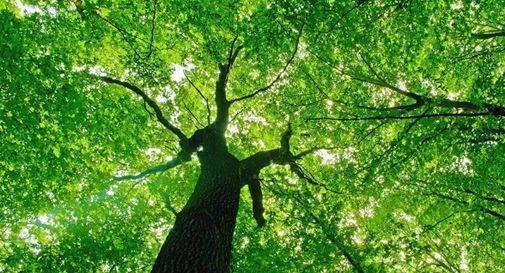 Giornata delle Foreste del WWF