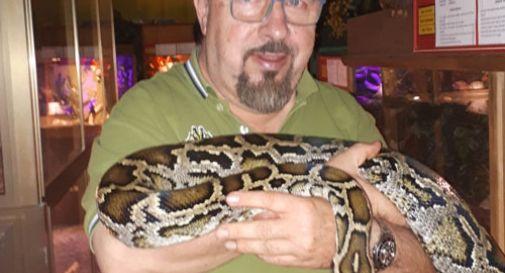 L'afa fa nascere più serpenti femmine