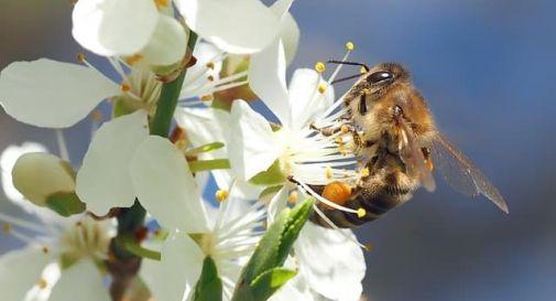 Asolo per la Giornata della Biodiverstià