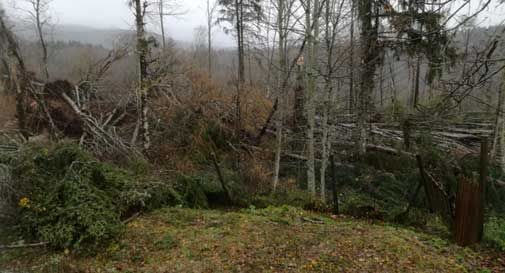 La furia del maltempo colpisce il Cansiglio, alberi abbattuti e strade bloccate