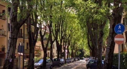 Salvi i 260 alberi di Santa Maria del Rovere