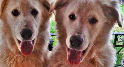 Cani avvelenati
