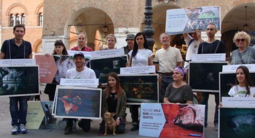 Vegani in piazza per difendere gli animali