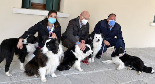 cani Pet Therapy