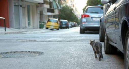 Gatto muore dopo aver morso proprietaria, sindaco sequestra felini