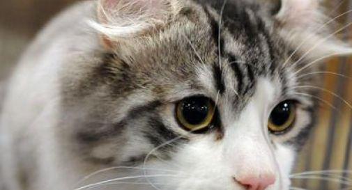 Prende a calci un gattino e gli spezza una gamba, multa da 10mila euro