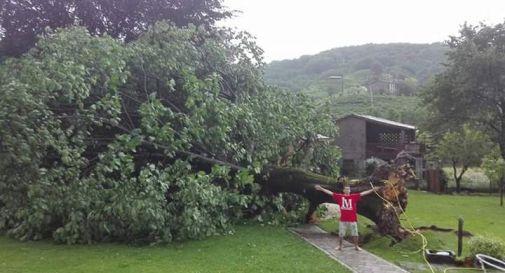 Temporali e vento, alberi sradicati e caos