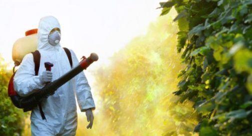 """2 morti e 6 malati di tumore in una strada. """"I pesticidi ci stanno uccidendo"""""""