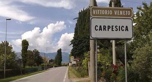 Carpesica