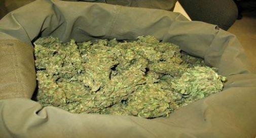 Maxisequestro di marijuana: 1 tonnellata e mezza diretta a Padova