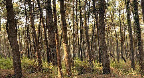 Estirpano bosco per fare vigneto, area sequestrata