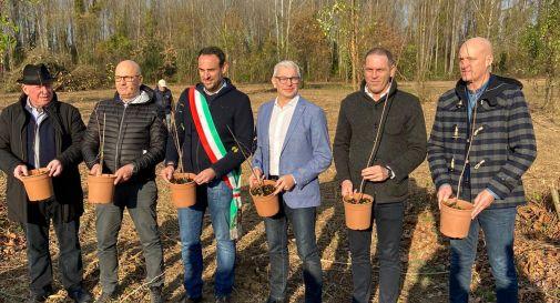A Treviso un nuovo bosco urbano con 1500 alberi