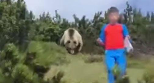 L'orso spunta dai cespugli ma il bimbo non si lascia prendere dal panico (Video)