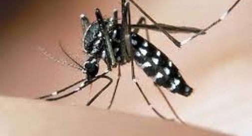 Il comune regala pastiglie contro la zanzara tigre