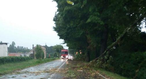 l'albero caduto a Chiarano