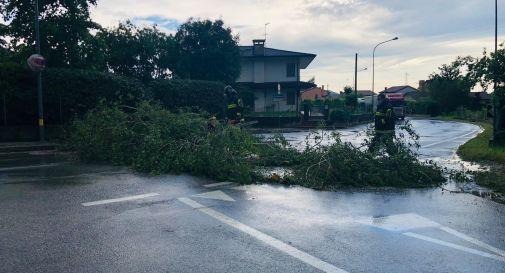 Col San Martino, albero in mezzo alla strada: traffico interrotto