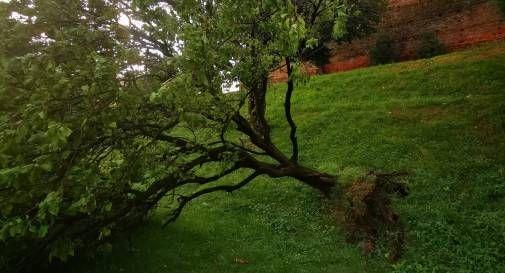 Castelfranco flagellata dal maltempo: albero finisce su un'auto, famiglia miracolata