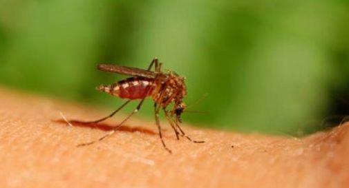 Coronavirus: la zanzara non è un vettore, ma meglio evitare le punture