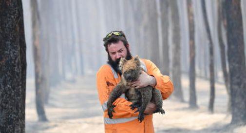 Australia: studio,3 miliardi animali spariti in incendi 2019