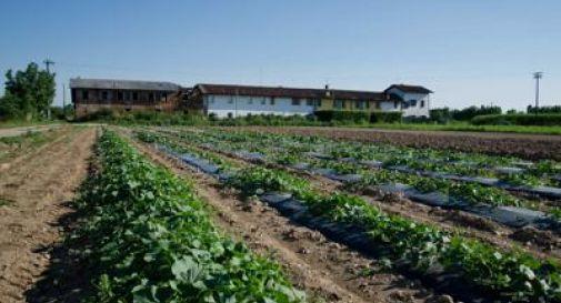 30 mln 'Pacchetto giovani' scommessa sul futuro dell'agricoltura in FVG