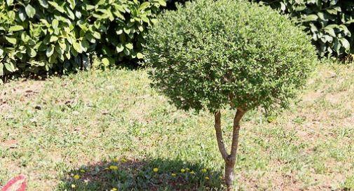 Un albero per ogni nato a Montebelluna